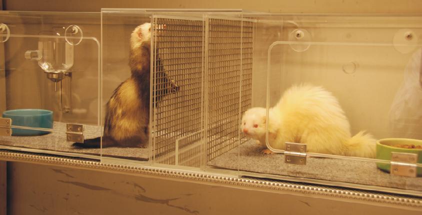[Image: ferrets.jpg]