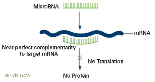 mirna function Integrated analysis of mirna and mrna 1 correlation between mirna and mrna microrna (mirna) is a type of non-coding rna (rna that.