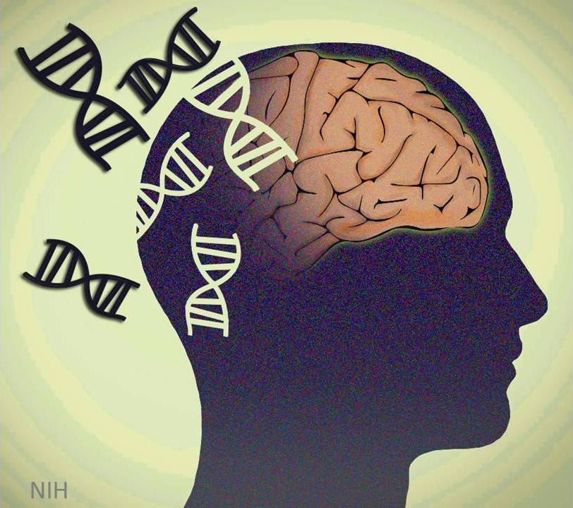 """genetic disorders schizophrenia Anybody who says, """"schizophrenia is a genetic disease"""" is simplifying our  understanding of this condition to the point of meaninglessness certainly  genetics is."""