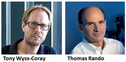 Head shots of Wyss-Coray and Rando