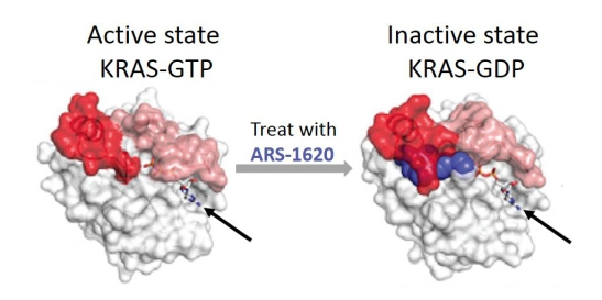 KRAS in active and inactive states